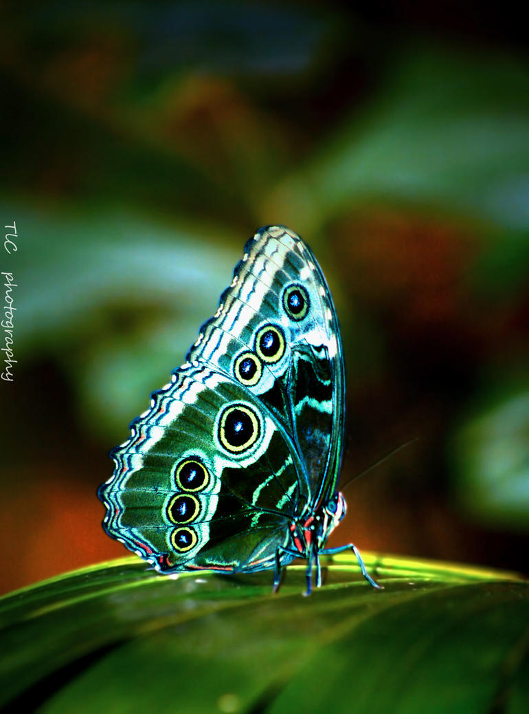 Beautiful butterfly by TlCphotography730 ...