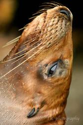 Seals Beauty Shots