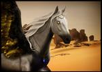 [COMM] in the desert