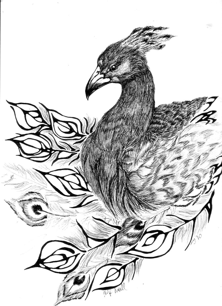 Realistic Peacock Drawings Peacock by tsalmaveth