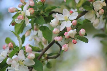 Flowers by Whurrledpeas