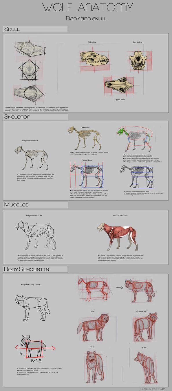 Wolf Anatomy - Part 1 by Autlaw on DeviantArt