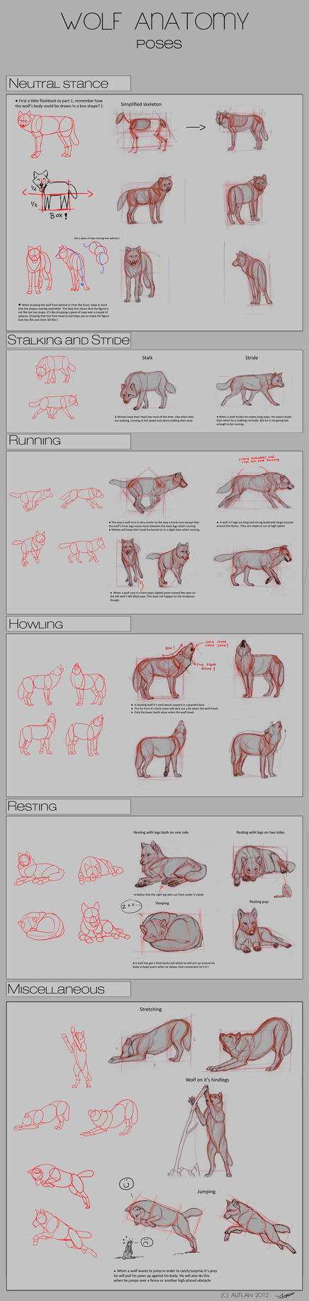 Wolf Anatomy - Part 2 by Autlaw