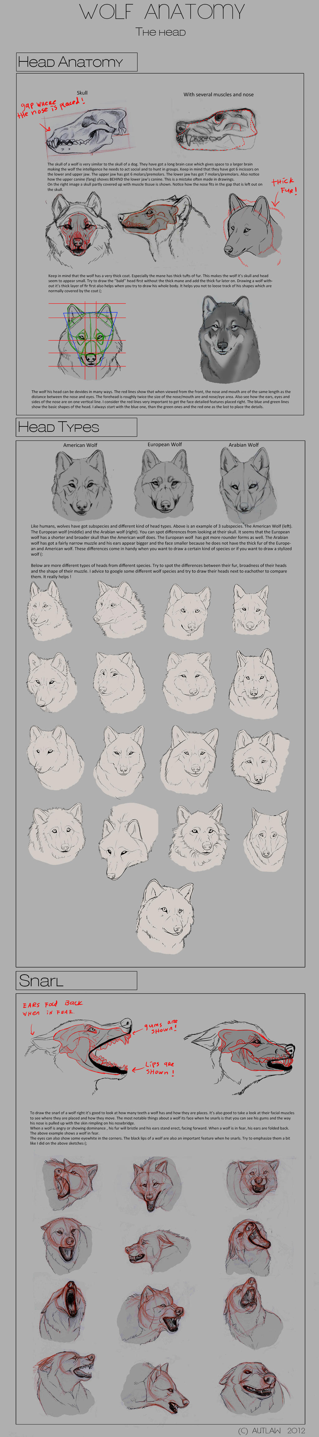 Wolf Anatomy - Part 3 by Autlaw