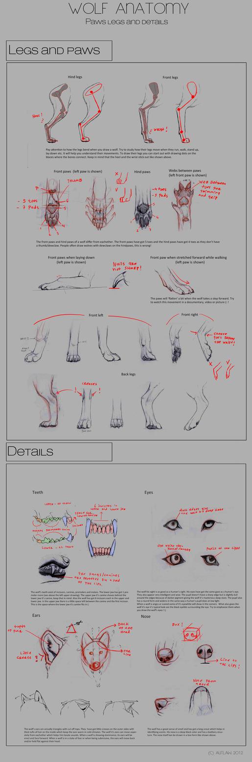 Wolf Anatomy - Part 4 by Autlaw