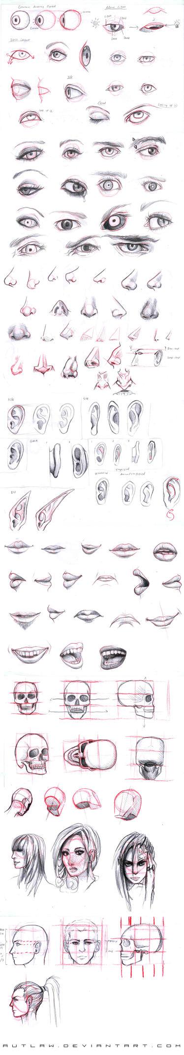 Studies part 1 by Autlaw