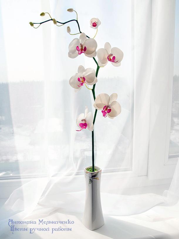 Orchid v.2 by SaisonRomantique