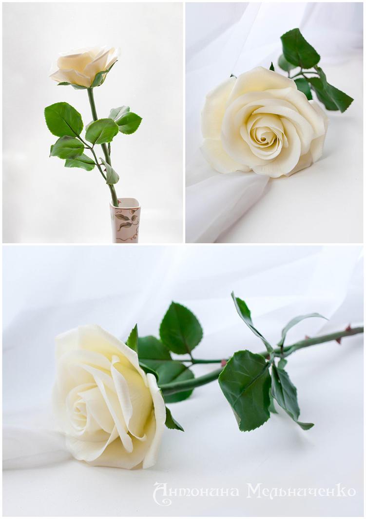 White Rose by Vakhara