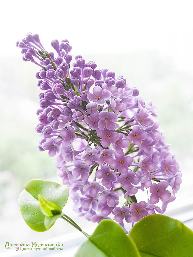 Lilac Syringa v.2 - Plymer Clay Flowers by CraftFlowers