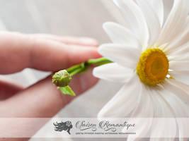 Daisy - Polymer Clay Flowers