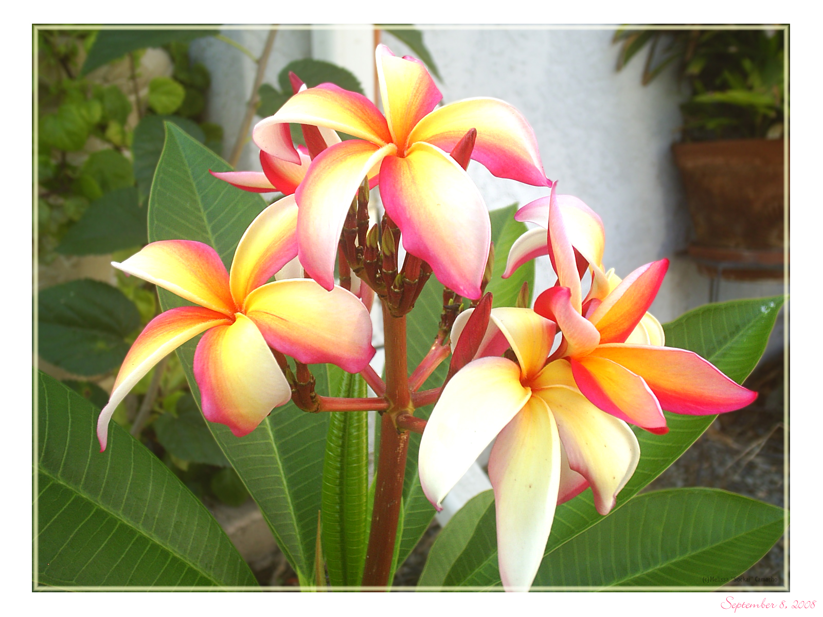 Hawaiian Flowers 2 by sockaichan on DeviantArt