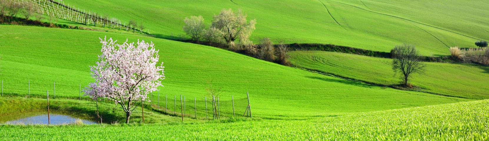 Country landscape by Alex-Br