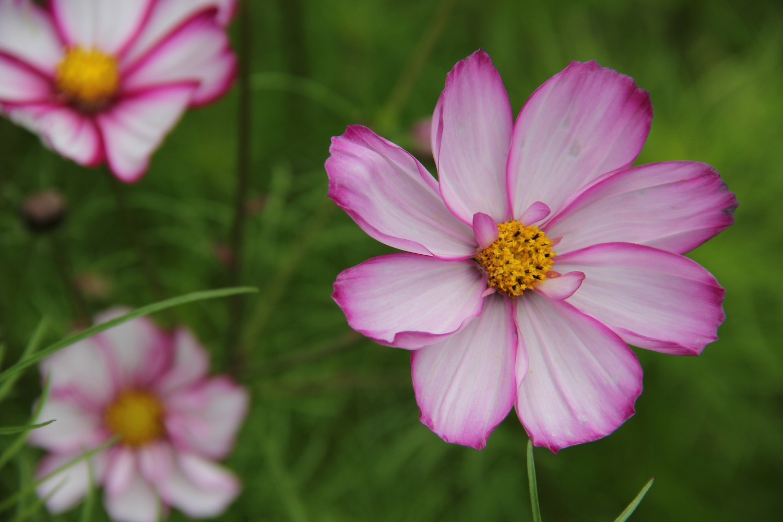 Flower Stock 1 by EloieeStock