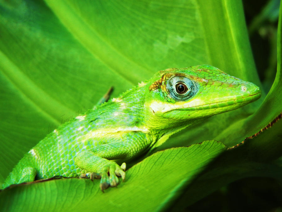 A Tropical Green by OECDLapushfan101