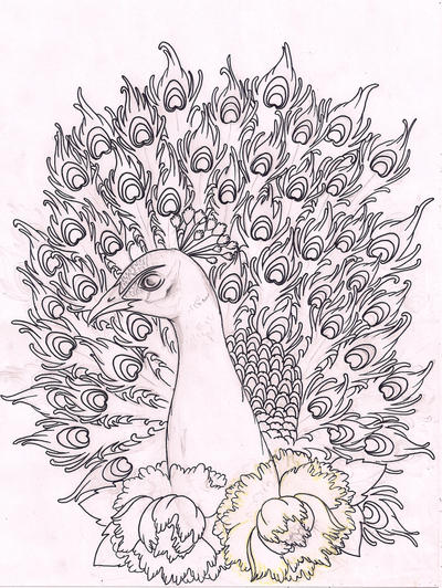 Line Drawing Peacock : Peacock sketchy linedrawing by kirzten on deviantart