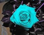 mis rosas, blu by KrySal