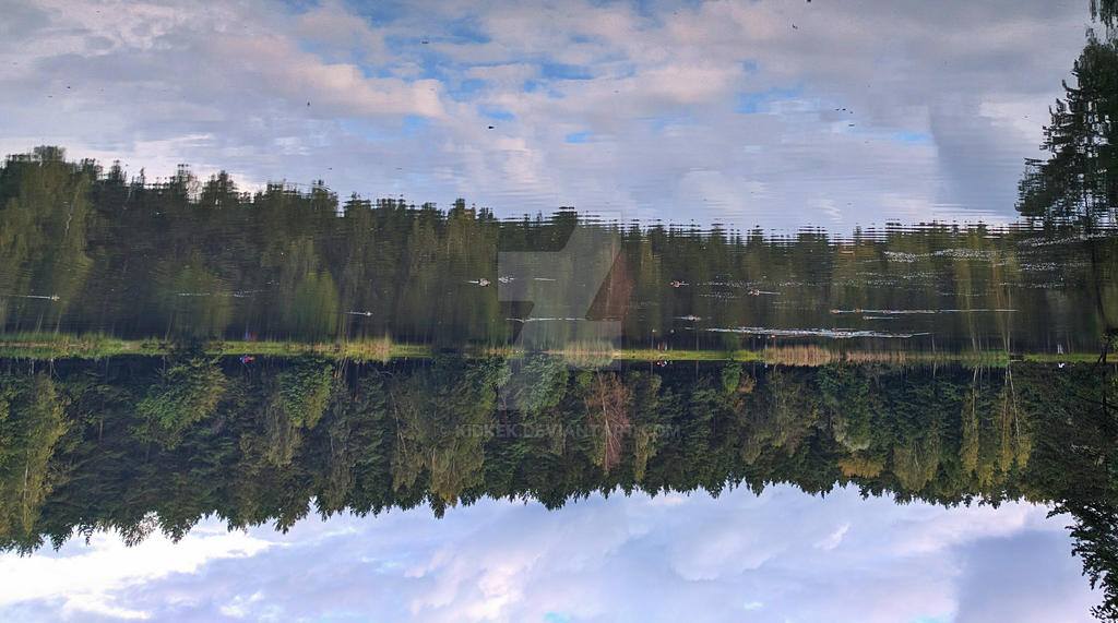 Reflected forest in the early autumn  by KidKek