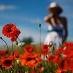 summer photo by alba-spb