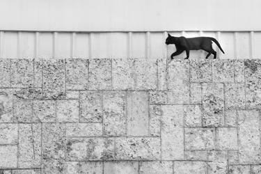Cat by sp-kirilov