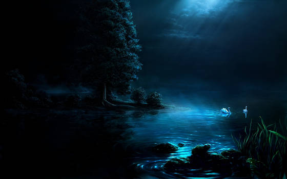 Swan night