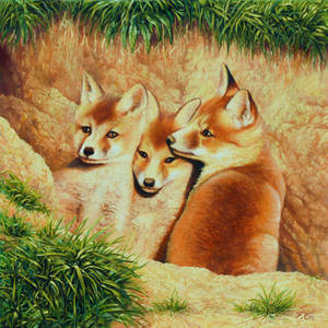 Young foxes