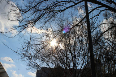 Sunshine by theshyfox