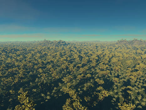 forest to horizon