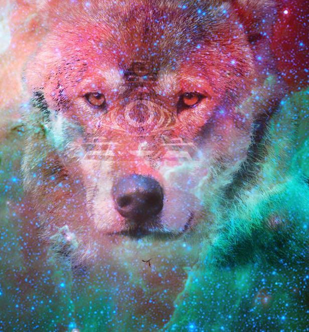 Galaxy Wolf By Muchlik3falln On DeviantArt