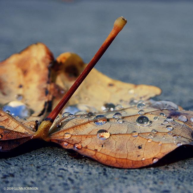 Rain Catcher 04 by FreshIsrael