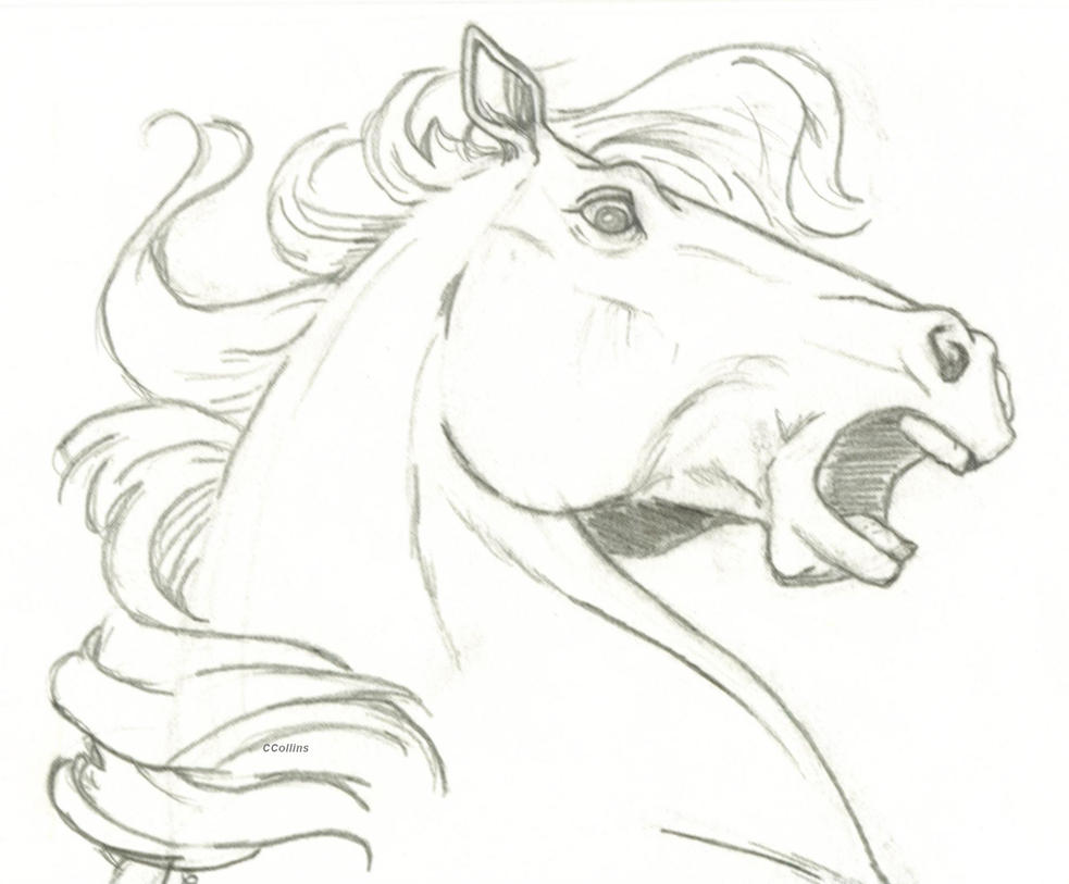 Horse Head Surprise By Ccangel33 On Deviantart How To Draw