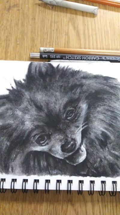 Pomeranian  by 98Diana