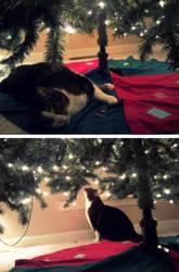 Sparkles' Christmas