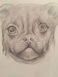 A dog? by bun-niii