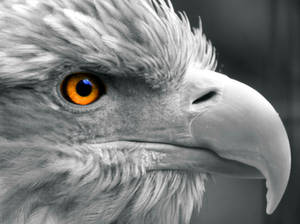 Eye of the-Eagle