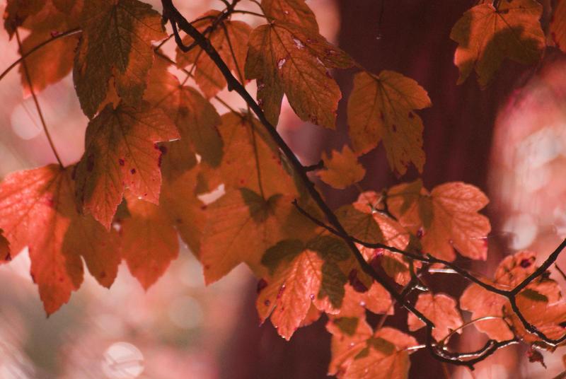 Jesen - Page 2 1st_day_of_autumn_by_kaz_d-d2zbmog