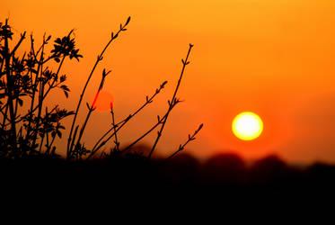 Ashy Sunset by Kaz-D
