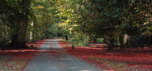 Autumn Lane by Kaz-D