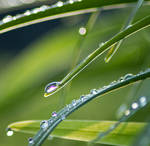 Day 111: Dewdrops by Kaz-D