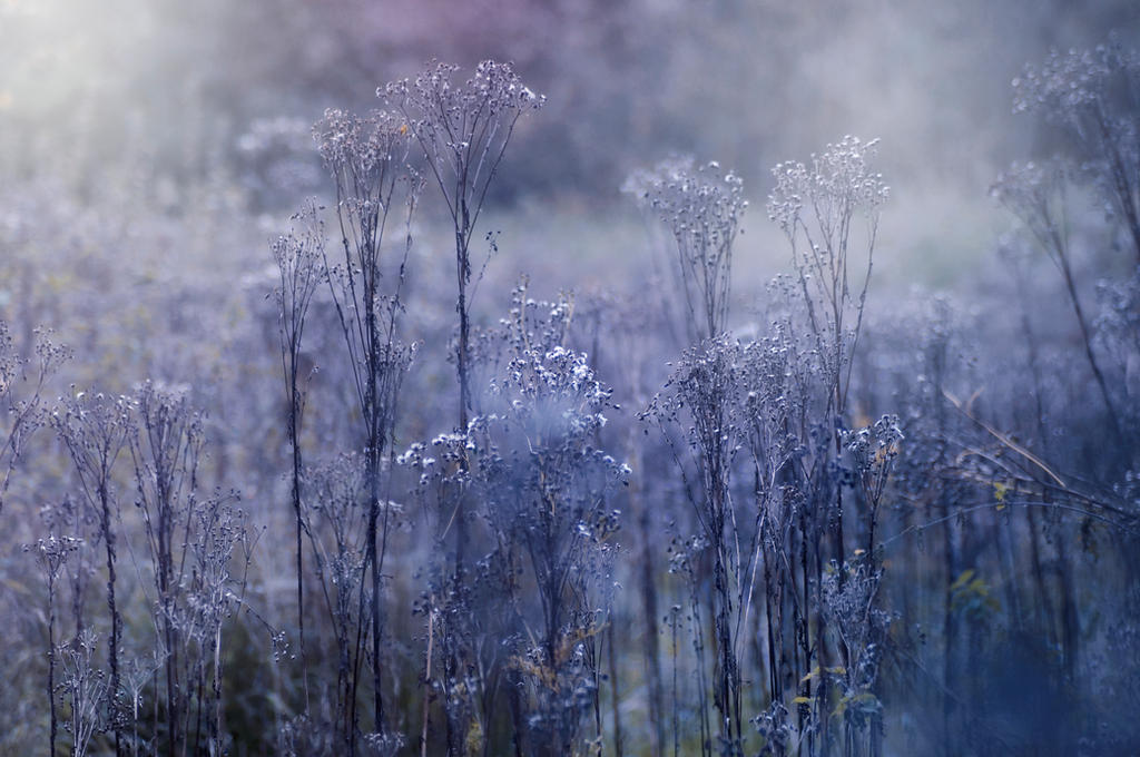 Blue September by Kaz-D
