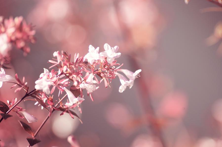 Day 289: Autumn Blossoms by Kaz-D