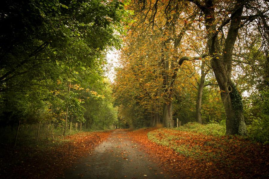 Day 290: Autumn Road by Kaz-D