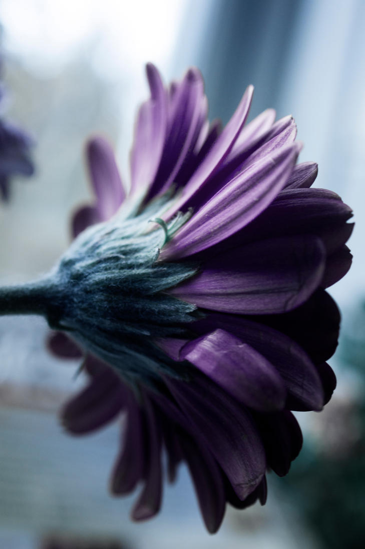 Day 325: Window Flowers by Kaz-D
