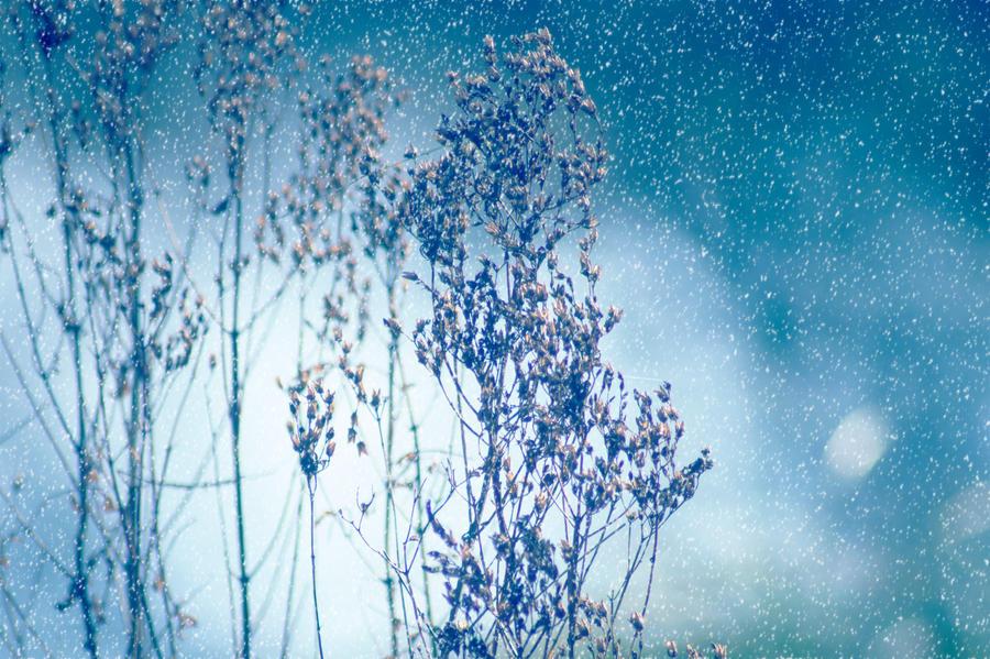 Frozen by Kaz-D