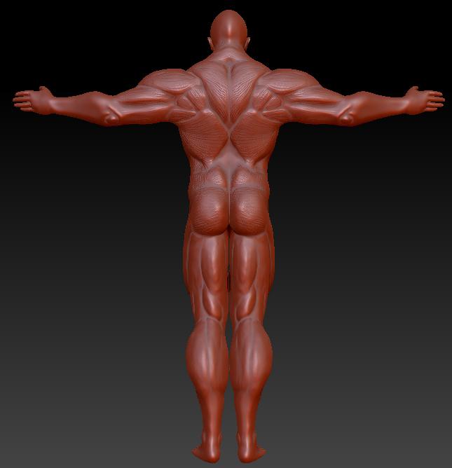 muscleman back by rmagrane on deviantart