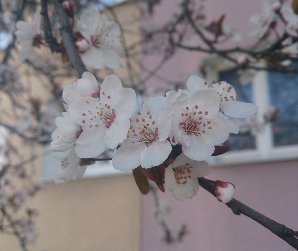 Spring in the city by Wilczyca-97