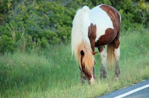 Horse Stock 08 by Jaded-Night-Stock