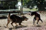 Dog Play Stock 01