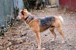 Dog Stock 072
