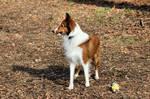 Dog Stock 175