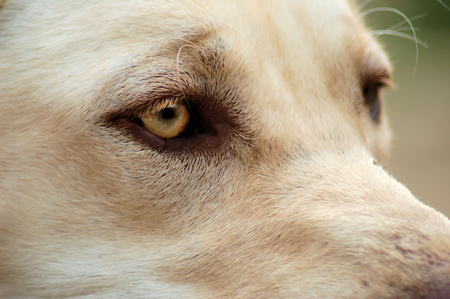 Dog Stock 188 by Jaded-Night-Stock